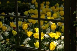Kollane värv pääseb aias enim mõjule päikesepaistelises paigas.