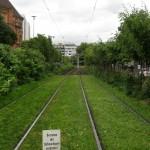Trammiteealused muruväljad Düsseldorfis. Sellist pilti ei näinud küll kogu linnas, kuid kesklinna kitsaskohtadest eemal oli rohelisi trammitee aluseid päris suurtel aladel. Lisaks ka põõsastik trammitee ning autotee vahel. Kogu kujundus lisas linnakeskkonda suure hulga rohelust.