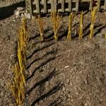 ehita aias - pajuokstest onn_00011