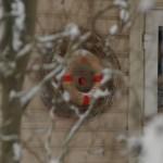 Erineva suurusega pärjad viinapuudest ja õlest punutud pärg on kaunistatud punase pitsi ja õunagaPühadekaunistused oma aiast. Aiakujundus_00009