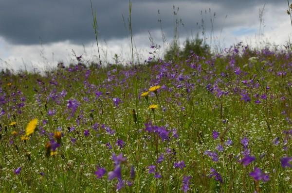 Lilleniit Lõuna – Eestis jaanipäeva paiku. Aiakujundus. Muru asemel_00014