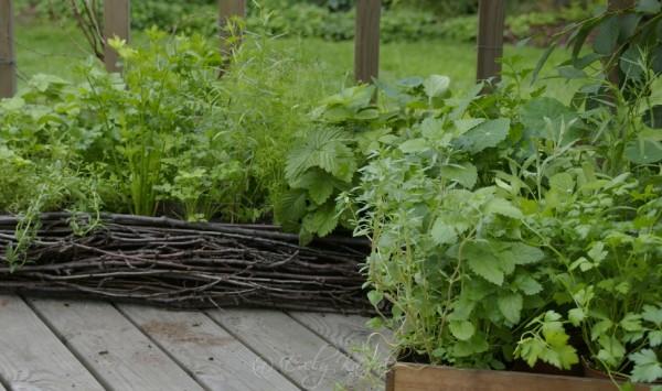 Väikesed – umbes ruutmeetri suurused kastid terrassil. Seal on taimed kasvamas väikestes pottides. Sellise variandi puhul peab kastmisega olema hoolas.Värske roheline oma aiast. Kuidas planeerida_00002