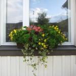 Eramaja akna pealt rõdukastist saab suvi läbi peterselli toidu peale näpistadaVärske roheline oma aiast. Kuidas planeerida_00006