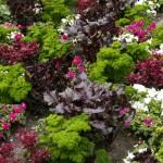 Suvelilled ja köögiviljataimed segamini. Värske roheline oma aiast. Kuidas planeerida_00007