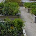 Puidust köögiviljakastid Chamount sur Loire festivalil Prantsusmaal. Värske roheline oma aiast. Kuidas planeerida_00011