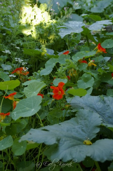 201304-kodukiri-aprill-söök-ja-lilled_00005