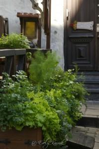 Olde Hansa suveterrassi konteinerid on enamuses sisustatud maitsetaimedega, milele lisatud õieilu.