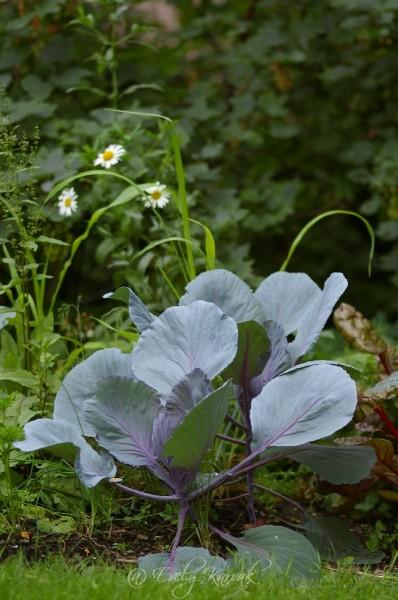 201304-kodukiri-aprill-söök-ja-lilled_00014