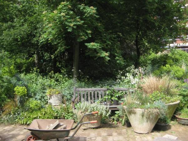 Aiakujundus. The Phoenix Garden London_00009