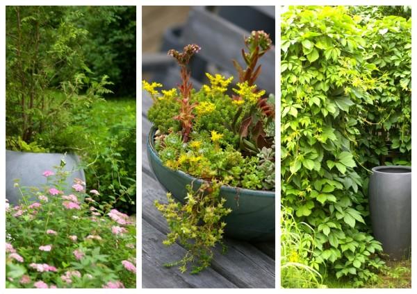 lillepotid-aiaidee-sügis