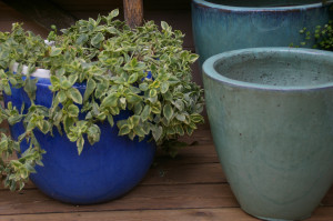 Lillepotid sügismüük, soodusmüük 30%