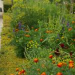 Tilli õisikud kõrguvad üle teiste taimede kaunilt ja graatsiliselt. Alhambra aiad. Olen proovinud tilli külvata näiteks segamini koos peiulillega ja tulemus on tore. Till kasvatab ennast peiulilledest läbi ja tulemuseks on lopsakas õitsev ja söödav pott.