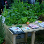 aiaikujundus-tarbetaimed-lillepotid_00028