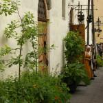 Piklikes seinaäärsetes kastides on suurematest taimedest noored õunapuud, rabarberid ja kõrged oad. Alumises kihis on veidi madalamad taimed. Tihe istutus teeb kastid lopsakaks. Restoran Olde Hansa Tallinnas.