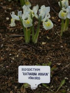 1. Võrkiirised Tallinna Botaanikaaias